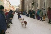 Quebec Winter Carnival Dog Race Picture