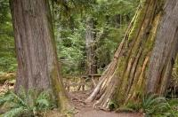 Cathedral Grove Pictures Vancouver Island
