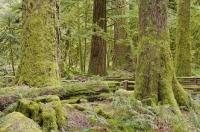 Photo Of Cathedral Grove