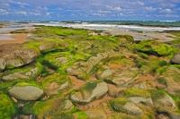 Algae covered rocks mingle with the golden sand found along the coastline of Waipapa in the Catlins district of the South Island of New Zealand.