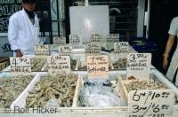 A fish market stall in China Town in the city of Toronto, Ontario, Canada.