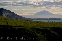 A paddock situated precariously near a sheer cliff, the dwelling place of a herd of sheep with a fabulous view of the North Taranaki Bight.