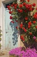 A rustic villa door is surrounded by climbing roses near Ponte du Loup, Provence, France.
