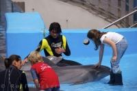 A couple of kids enjoy a close encounter with the dolphins at the City of Arts and Science in Valencia, Spain.