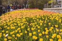 During spring, Commissioners Park in the city of Ottawa, Canada bursts to life with colourful blooms.