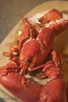 Cooked Lobster Newfoundland