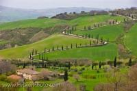 A country road lined by trees winds amongst the landscape of Tuscany in the Province of Siena, Italy where you have beautiful scenic views.