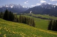 Dandelions cover the hillside overlooking the beautiful countryside and Dolomite mountain range in South Tyrol, Italy in Europe.