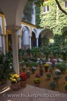 The courtyard garden along Callenjo de Agua in the City of Sevilla in Andalucia, Spain is filled with potted flowers and plants.