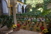 The courtyard gardens along Callejon de Agua in the Santa Cruz District in Sevilla, Spain is a vision of beauty with the potted flowers and plants displayed.