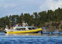There are many operators of wildlife viewing tours from Vancouver Island including whale watching in British Columbia.