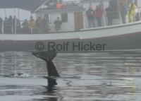 The Gikumi is one of the most known whale watching vessels on Vancouver Island along the British Columbia Coast of Canada