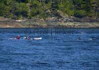 kayaking tours orca