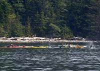 Kayaking Tours Whale Watching British Columbia