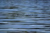 Pictures Of Water Ripples Background