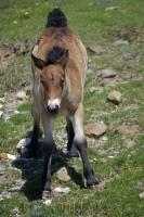 A cute and curious foal stands motionless while it stares at the camera.