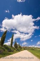 Cypress trees bend and sway in the wind as they grow along the gravel road leading up to the historic town of Pienza in Siena, a Region of Tuscany in Italy. Cypress trees are a very common site in Tuscany and they can be seen all over the Region.