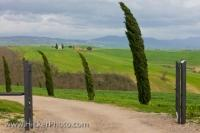 Along the country road through the Region of Tuscany, Italy in Europe, tall Cypress trees adorn the roadside with their pointed shapes.