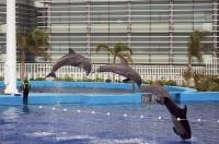 Dolphin Aquarium Show Valencia Spain