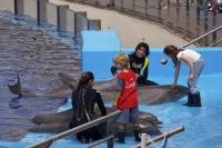 Interaction with a dolphin is a great learning experience for kids and adults, as these these kids at the L Oceanografic in Valencia, Spain get to find out.