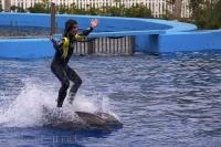 A dolphin ride is something which many people will never encounter in their lifetime, like this trainer at the L'Oceanografic in Valencia, Spain.