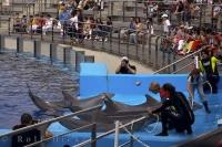 Each dolphin at the L'Oceanografic at the City of Arts and Science in Valencia, Spain can perform many different tricks.