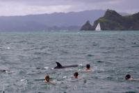 Tourists love to get the thrill of a lifetime and spend their day swimming with the dolphins off the North Island of New Zealand.