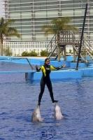 A trainer balances on top of the noses of the Bottlenose Dolphins at the L'Oceanografic in Valencia, Spain in Europe.