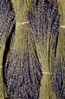 Spikes of lavender flowers are dried and presented in bunches for sale at the Cours Saleya in Nice, Provence, France.