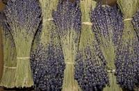 A beautiful fragrance wafts in the air near these bundles of dried lavender.