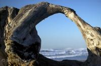 A well weathered piece of driftwood frames the Pacific Ocean waves along the Oregon Coast, USA.