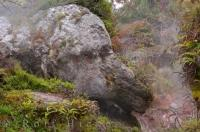 The resemblance to an elephant in this rock formation at Orakei Korako on the North Island of New Zealand is uncanny.