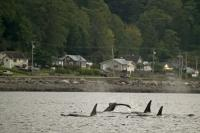 Whale watching is a popular tourist activity on Northern Vancouver Island
