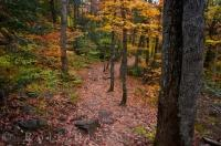 As Fall highlights the forest in Oxtongue River-Ragged Falls Provincial Park in Ontario, Canada, the leaves scatter themselves across the trail.