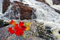 During the Fall season, a colorful leaf design was created and placed alongside a waterfall in Lake Superior Provincial Park in Ontario, Canada.