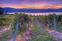 A glorious sunset heralds the end of another fall day in the Okanagan Lake Region and creates a surreal light over the scenery and a vineyard.