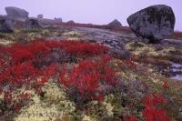 The large boulders and granite landscapes of the Lighthouse route near Peggy's Cove in Nova Scotia are accentuated by the fall colours and mist.