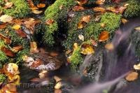 Fall Leaves Moss Water Stream