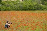 The Gorges du Verdon opens up to meadows and fields of bright red poppies.