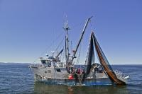 A commercial Fishing Boat fishing for Salmon in Queen Charlotte Sound off Vancouver Island