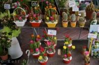 Flowering Cacti Cours Saleya France