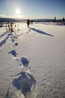 Footprints Snow Yukon Winter