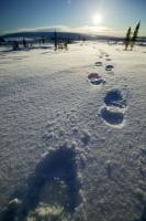Footprints Snow Canadian Arctic