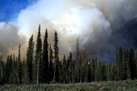 The billowing smoke from a nearby forest fire looms over the trees and landscape in the Yukon Territory of Canada.