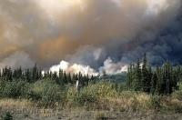 There are an average of 100 forest fires each year in the forests of the Yukon Territory in Canada.