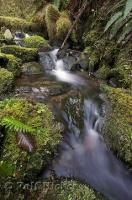 A pristine stream in the Queets River Area rain forest on the Olympic Peninsula of Washington.