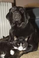 Funny Animal Pics, Black and White Cat sleeping with Black Lab