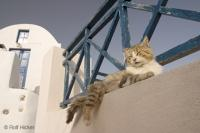 There were many funny cats in Santorini, Greece just lying about and sleeping in the sun. This cute cat had his leg hanging over the edge and looked pretty relaxed in the Greek sun.
