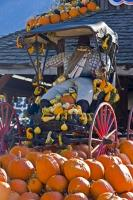 One of the many outdoor displays at a produce stall during the fall season in Keremeos, using an old horse buggy, squashes and a funny mannequin.