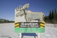 Funny Road Sign Caution Moose